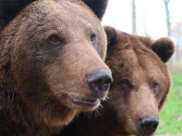 Der Bärenmarkt von Bitcoin beginnt, sobald er dieses Niveau unterschreitet